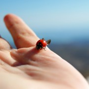 ladybug-455494_1920